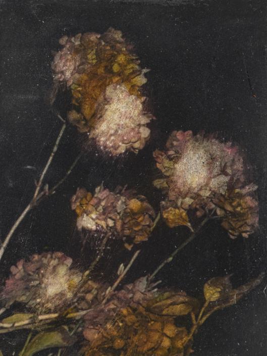 Il y a une vie après les hortensias - 20 x 15 cm - Technique mixte - 2019