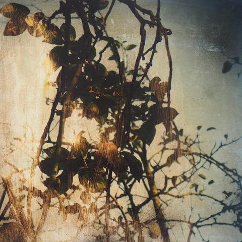 Serie# Les branches - 30 x 30 cm - Tirage argentique et acrylique