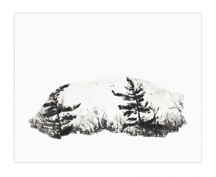 Pins - Pointe sèche sur zinc / 26 x 33 cm - Papier: Hahnemühle 300g - Edition 15