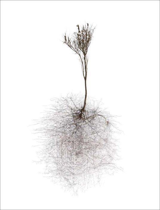B.Flachot - A-Arborescence(s)#09-85x110 cm