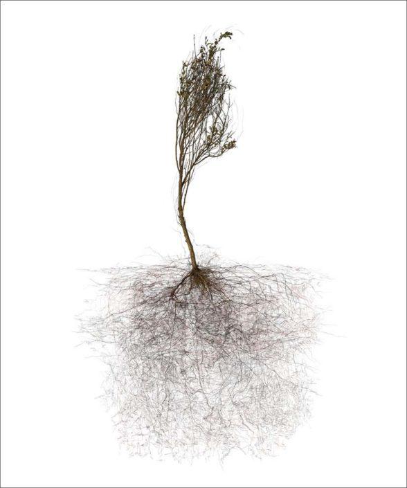 B.Flachot - A-Arborescence(s)#10-85x110 cm