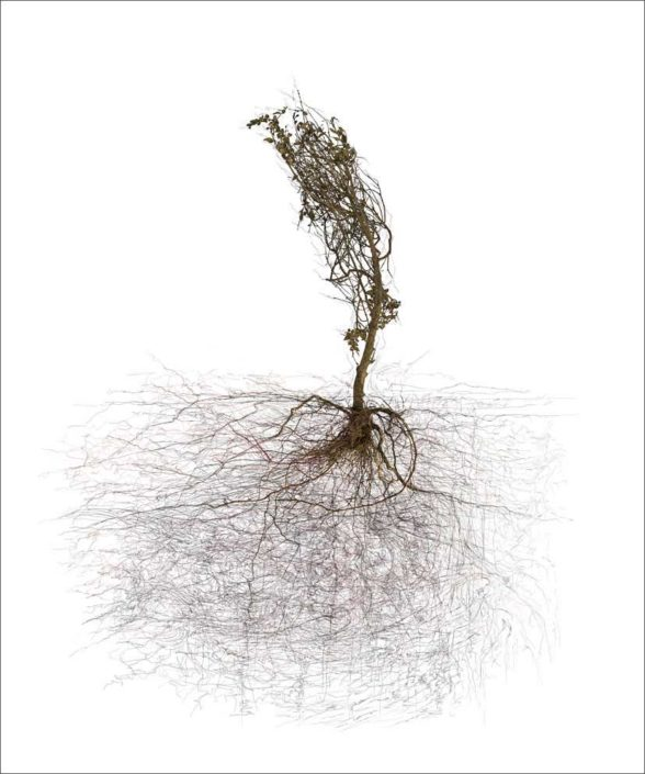 B.Flachot - A-Arborescence(s)#11-85x110 cm