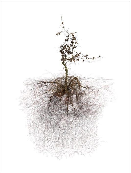 B.Flachot - A-Arborescence(s)#14-85x110 cm
