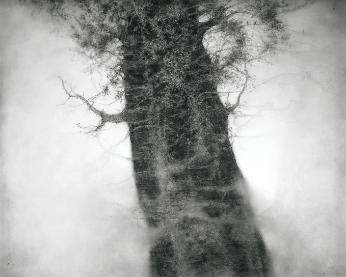 Sue Bryan - Spring tree - Charcoal & Graphite on canvas - 88 x 108 cm